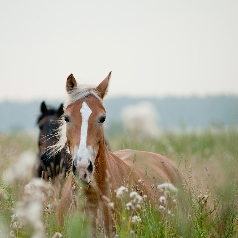 Destinations for Horse Lovers   Exclusive Style   Maravilloso's Blog