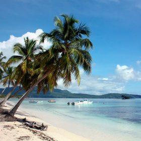 Especies marinas más vistas en el Caribe